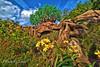 The Tree of Life (Mambo'Dan) Tags: treeoflife animalkingdom disneyworld clouds sky flickrfriday