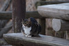 K_1_2978.jpg (akahigeg) Tags: 猫