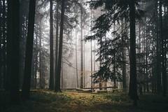 Before the Snow (desomnis) Tags: woods woodland nature mühlviertel austria österreich upperaustria böhmerwald bohemianforest trees mist fog foggy haze autumn forestglade landscape desomnis canon6d sigma35mm