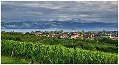 Wine Region Lake Constance (Norbert Kaiser) Tags: aussicht weinberg vineyard kressbronn bodensee säntis lakeconstance