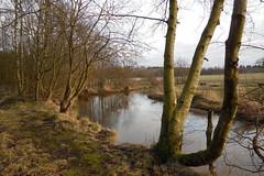 A sunny day (Steenjep) Tags: vinter winter haderup haderiså å stream sun sol refleks reflex