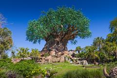 Disney's Animal Kingdom - Tree of Life (Howie Muzika) Tags: wdw waltdisneyworld disneysanimalkingdom discoveryisland treeoflife themepark