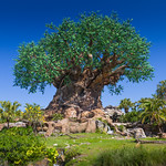 Disney's Animal Kingdom - Tree of Life thumbnail