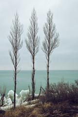 III (matthewkaz) Tags: trees tree lakemichigan lake water greatlakes snow winter ice pointbetsie pointbetsielighthouse pointbetsiebeach shore shoreline benziecounty michigan 2017