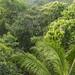 Panama Rainforest Discovery Center gamboa panama pandemonio 2017 - 02