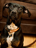 Wimpy, Just Because (JLBondia) Tags: dog blackdog wimpy mutt rescue