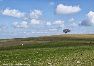l'albero solitario - lonely tree