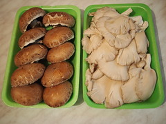 Mushroom-time (schroettner) Tags: vegan greece griechenland anatoli