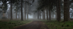 Winters End (Mark McLeod 80) Tags: fog australia victoria reservoir 2015 markmcleod sigma24105mmf4dgosart markmcleodphotography deanballarat treesvic