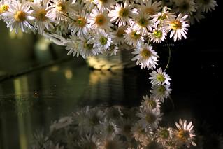 Nhớ 1 mùa hoa...