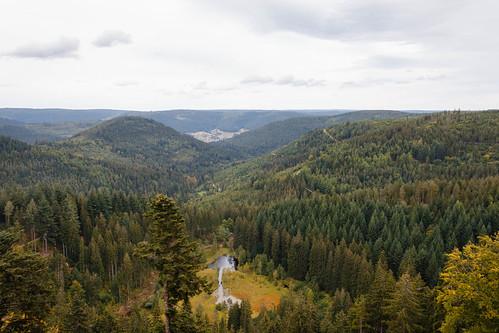Vue sur l'Ellbachsee au Kniebis