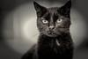 Jade the Grande Feline Dame (photocat001) Tags: cat older respected grief thrive adversity resurrect grandedame jadegrandefelinedame
