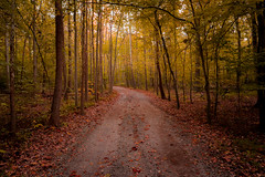untitled033 (Dan_Girard_Photography) Tags: trees fall nature leaves landscape 2015 dangirardphotography