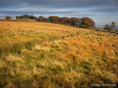 Oak's Piece (Roger B.) Tags: autumn unitedkingdom sheffield moorland southyorkshire gbr grassmoor