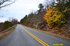 Hainging On :) (tripod_treker) Tags: trees fall blueridgeparkway roadscenes jeffersonnationalforest