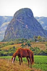 Vinales Valley 2, Cuba (Artypixall) Tags: horse mountains cuba farmland getty vinales faa tobaccofield