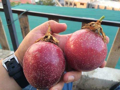 Passion Fruit Large nize size b Oct 15, 2015