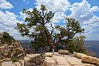 Lonesome (biglannie) Tags: arizona usa tree beautiful outdoors colorful solitude postcard scenic canyon american stunning wilderness rugged americanwest grandcanyonnationalpark westernlandscape lonesometree