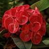 Whirls (brev99) Tags: flower tulsa tulsagardencenter conservatory plant greenhouse sigma1770os d7100 dxofilmpack5 perfecteffects10 ononesoftware closeup linnaeusteachinggarden