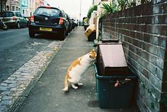 Totterdown cat (glenn weaver) Tags: cat ektar kodak totterdown bristol street canadian film lab leica m6 summicron 35