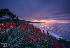 Winter Sunset (without reservation) Tags: sandiego california sunset lajolla scripps scrippspier aloeflowers red sandiegosunset sonya7rii