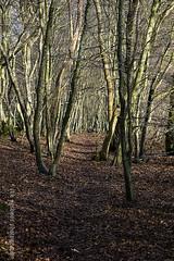 365-3 Path through the trees (ianbartlett) Tags: outdoors sunlight frost trees shadows horse riding twisted bulbs heathfieldpark signposts