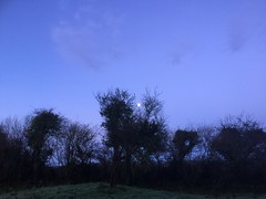 The Moon Between The Branches - Ennis - Ireland - Christmastime - December 2016 (firehouse.ie) Tags: daybreak morningtime countyclare ennis skies vegetation fauna flora tree moon sky dawn morning ireland eire landscape december winter 2016 frosty cold early weather rural countryside trees lunar