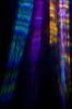 My new light trousers (mccullin4) Tags: refraction refractogram refractography refractographs caustics colours canon50d colour light lensless lightart lenseless lightwaves longexposure l