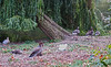 UK 2016 727 (Visualística) Tags: uk unitedkingdom reinounido gb granbretaña greatbritain england inglaterra ciudad city stadt urbano urban parque park london londres londra