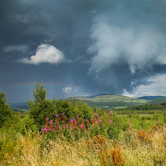 Passing storm over Cors Fochno. (Alan Hughes Mach) Tags: corsfochno borthbog cymru wales uk dyfinationalnaturereserve unesco dyfibiosphere bog marsh mire peatbog peat ceredigion borth walescoastpath llwybrarfordircymru ceredigioncoastpath rosebaywillowherb willowherb vegitation flowers clouds storm thunderstorm thunder rainbow hinterland ygwyll hills thundercloud weather