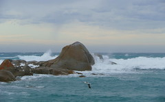 A stormy day at North East Rock, Flinders Island (The Pocket Rocket) Tags: waves northeastrock silvergull northeastriver tasmansea flindersisland tasmania australia