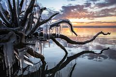 Kraken lacustre (Galep Iccar) Tags: ghiaccio ice water acqua natura natur landscape sunset tramonto paesaggio tree albero woods