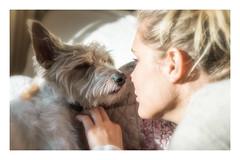Noses..... (christilou1) Tags: sony a7rii fe85 14 gm dog portrait girl love affection mastin portra 160