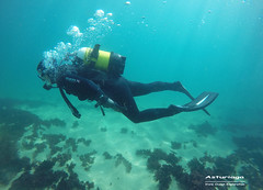 Asturiaga Underwater (YellowSingle 单黄) Tags: asturiaga fontarrabie scuba diving vivre ocean plongée atlantic spain hendaye scaphandre gopro