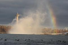 Niagara Falls (Peter Granka) Tags: niagarafalls niagarariver niagara skylontower rainbow mist fog petergranka canadageese