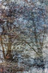 Puddles (Multiple Exposure) 90 (pni) Tags: tree reflection ice water multiexposure multipleexposure tripleexposure lapinlahti lappviken helsinki helsingfors finland suomi pekkanikrus skrubu pni puddle