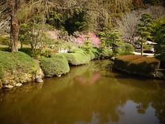Ume 2 梅2 (Shutter Chimp: Im back!) Tags: japan 日本 水戸市 水戸 水戸仙波公園 公園 池 梅 反射 mito senba park tree ume reflection pond 木 blossom