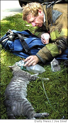 firefighter rescue cat pic
