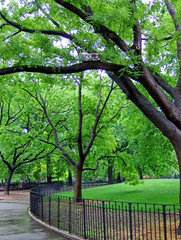 guess where nyc (seth_holladay) Tags: nyc trees june manhattan guesswherenyc parks 2006 nycguessed thompkinssquarepark dmnycguessed