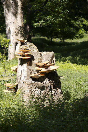 Bracket fungus consuming a tree stump