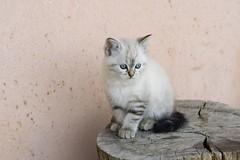 Posa #1 (darkmavis) Tags: portrait cat gatto ritratto sigmalens darkmavis sigma70300apomacrodg whiskina