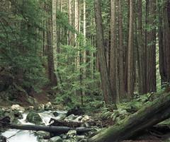 Lime Kiln State Park, California 2005 (artandscience) Tags: trees kodak redwoods 160vc largeformat