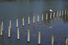 Room for More (Paul Davidson) Tags: blue bird water japan nagoya  posts       hoshigaokazoo