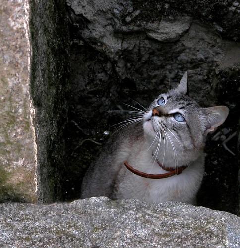 El gato de Cela