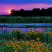wetlands sunset - by Steve took it