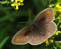 Motyl - Butterfly (arjuna_zbycho) Tags: flowers macro green yellow butterfly natur olympus schmetterling e500 motyl motyle