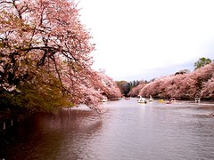 inogashira koen (michenv) Tags: pink lake japan digital photoshop geotagged boats asia michelle olympus 2006   sakura cherryblossoms digitalcamera orient camedia  nihon digitalphotos digitalphotography  olympuscamedia camediaseries       olympusdigital geotoolgmif theworldthroughmyeyes twtme olympusc50z michenv olympusx2 michenv2006  geolat35699582 geolon139577715