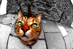 sniff (drBenMonkey) Tags: street colour topf25 cat d50 nose grey topf50 nikon looking gray down lookingup fisheye sniff 105mm explored cc700 cc100 mybestpics impressedbeauty