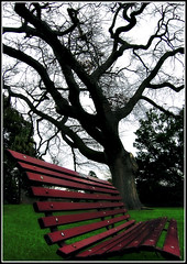 Solitude (aumbody images) Tags: park winter cold tree gardens bench chair solitude australia melbourne victoria botanicalgardens royalbotanicgardens lovephotography aumbodyimages
