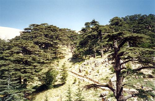 The Cedars